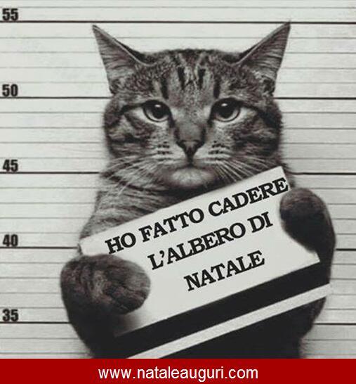Addobbi natale gatto