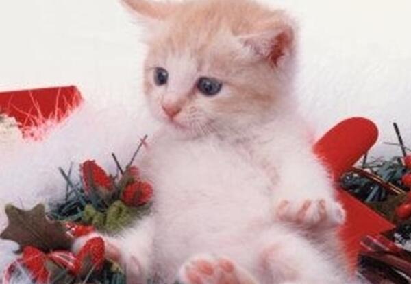 Immagini Animali Natale.Animali A Natale I Nostri Amici Animali Vestiti Per Le